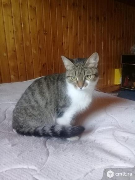 Ищем дом кошке Муське. Фото 1.
