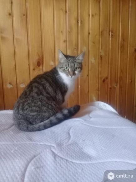 Ищем дом кошке Муське. Фото 2.