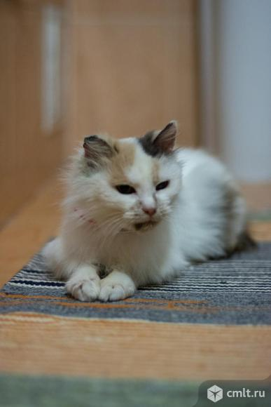 Кошка Мари в добрые руки. Фото 1.