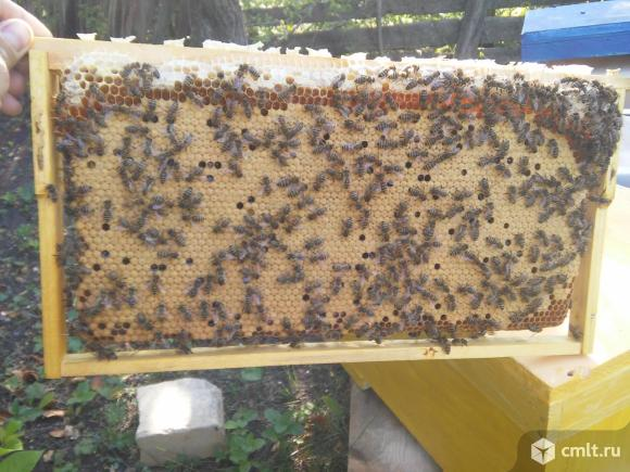 Пчелопакеты рут. Фото 1.