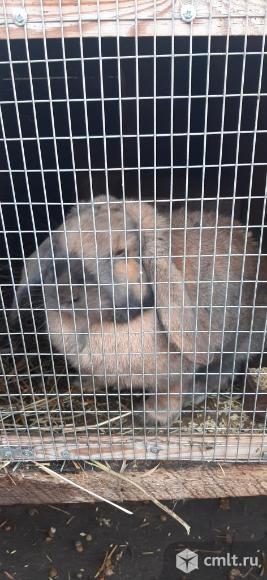 Продажа кроликов. Фото 1.