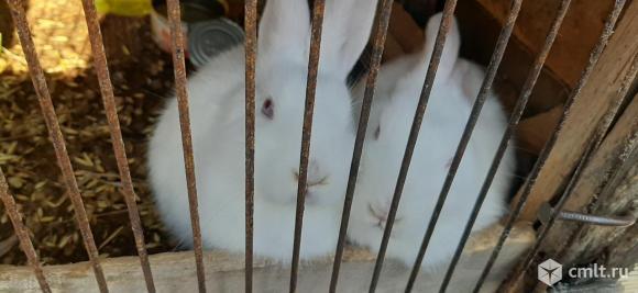 Продажа кроликов. Фото 19.