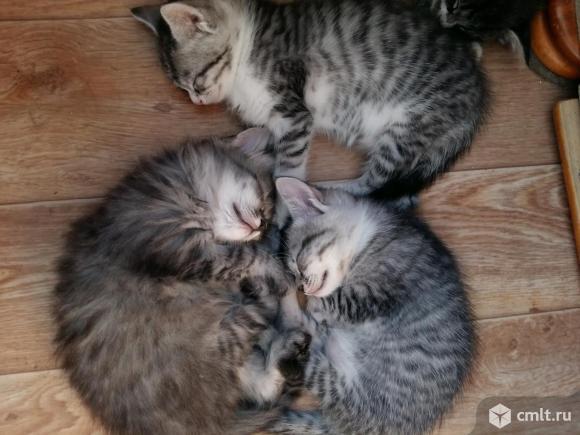 Ласковые котята-охотники. Фото 1.