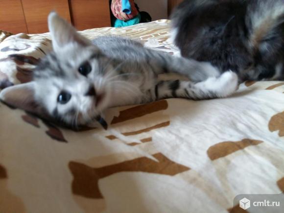Ласковые котята-охотники. Фото 3.