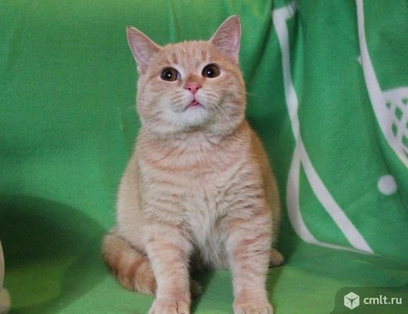 Котенок Персик в добрые руки. Фото 1.