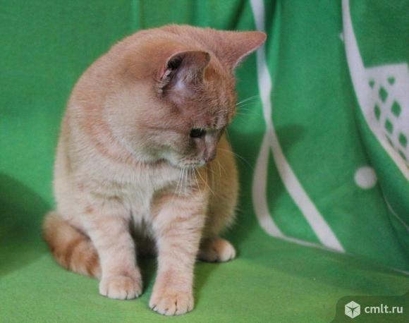 Котенок Персик в добрые руки. Фото 5.