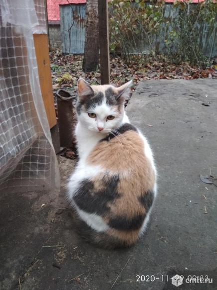 Кошки. Фото 4.