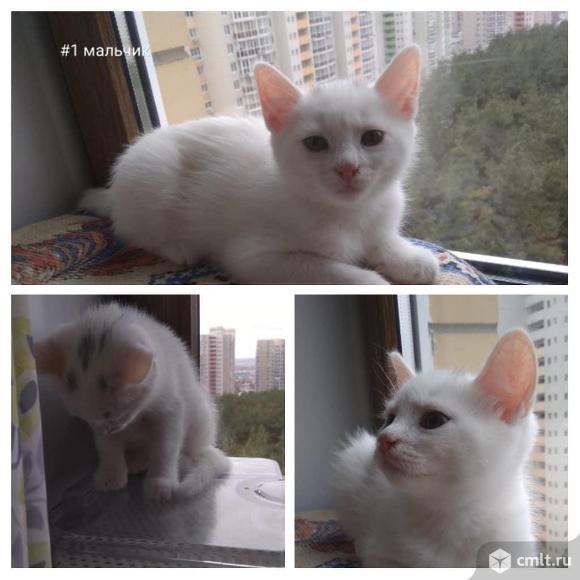 Котята 2 месяца. Фото 1.