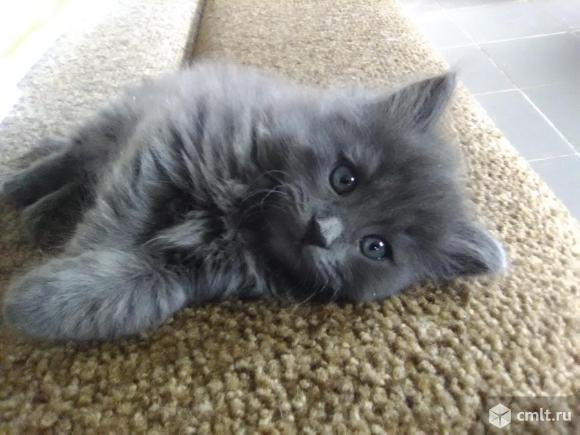 Котенка, девочка, родилась 11.09.2020, в добрые руки отдам. Фото 1.