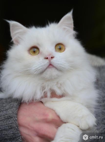 Котик Мэни в хорошие руки. Фото 1.