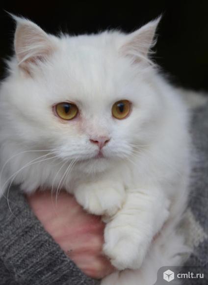 Котик Мэни в хорошие руки. Фото 3.