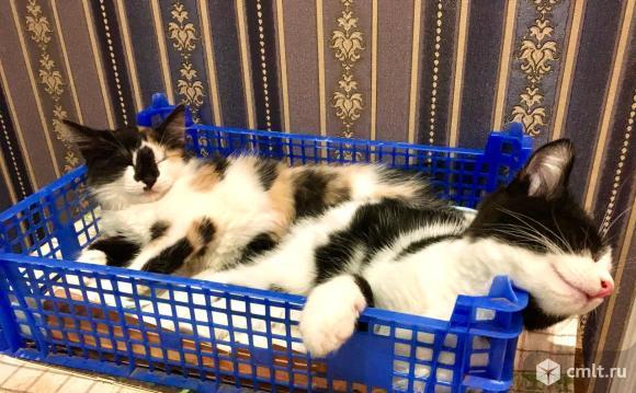 Котик и кошечка в добрые руки. Фото 3.
