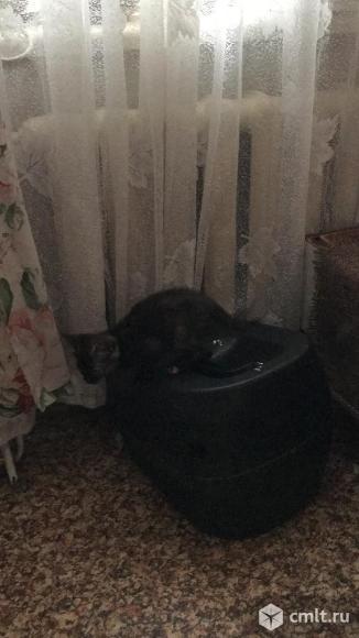 Домашние  котята. Фото 5.
