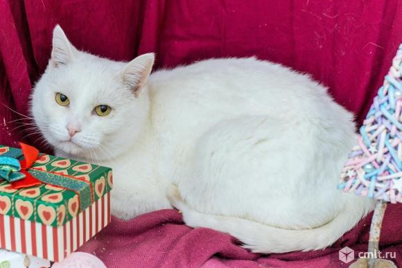 Кот Белый. Фото 1.