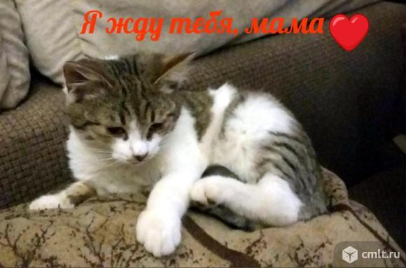Котенок мальчик в хорошие руки. Фото 1.