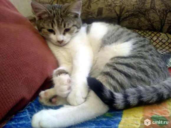 Котенок мальчик в хорошие руки. Фото 3.