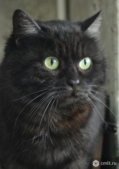 Кошка по имени Бобер. Фото 1.