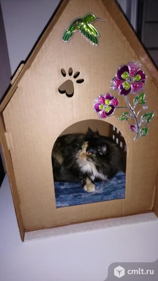 Домик для кошек картонный. Фото 4.