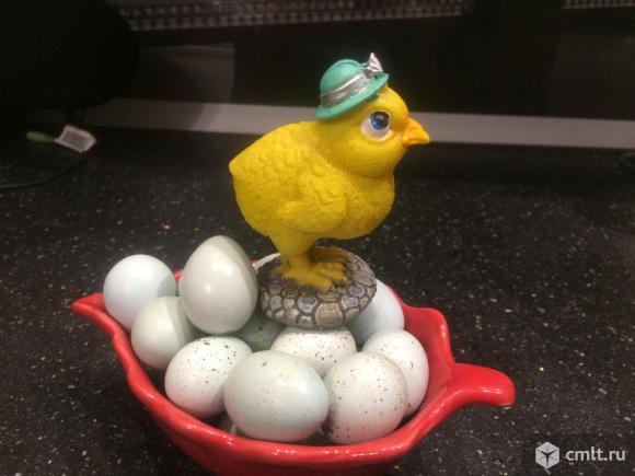 Голубые яйца .Перепела Селадон. Фото 1.
