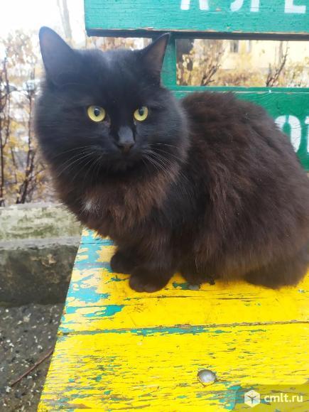 Котик. Фото 3.