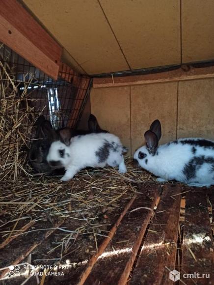 Кролики. Фото 10.