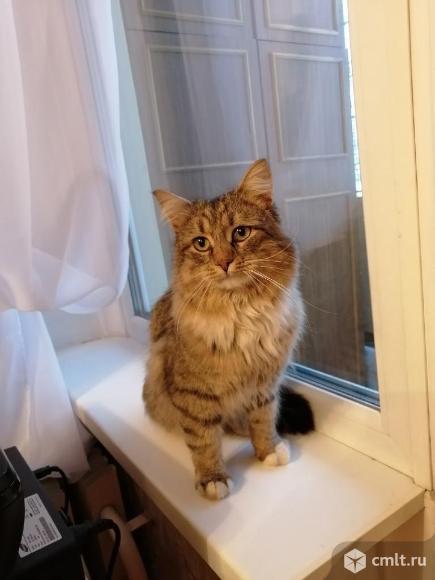 Кот Борис в добрые руки. Фото 1.