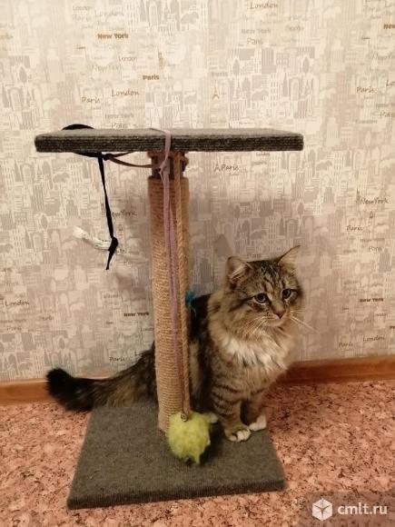 Кот Борис в добрые руки. Фото 3.