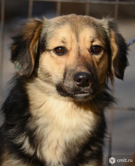 Молодая небольшая стерилизованная собачка Буся. Фото 1.