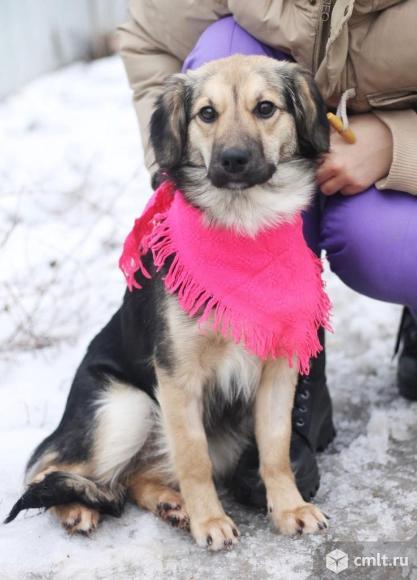 Молодая небольшая стерилизованная собачка Буся. Фото 3.