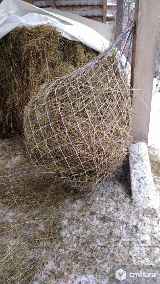 Рептух (медленная кормушка). Фото 4.