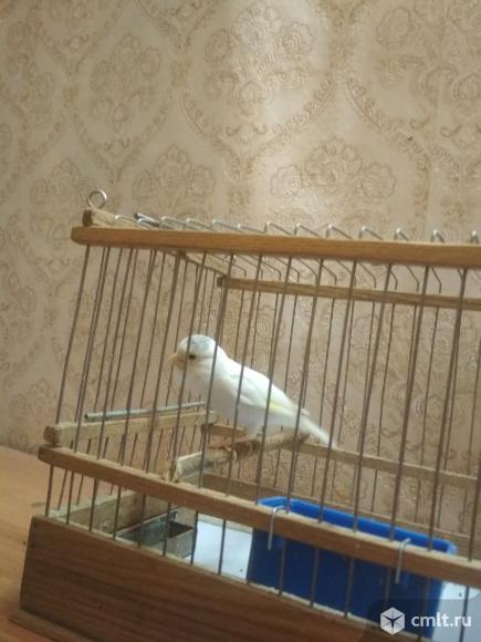 Продажа птиц. Фото 4.