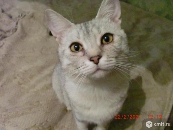 Котик-подросток (8 месяцев) в хорошие руки.. Фото 1.