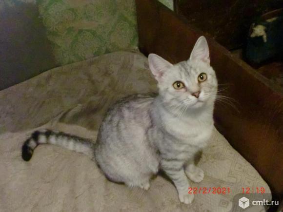 Котик-подросток (8 месяцев) в хорошие руки.. Фото 2.