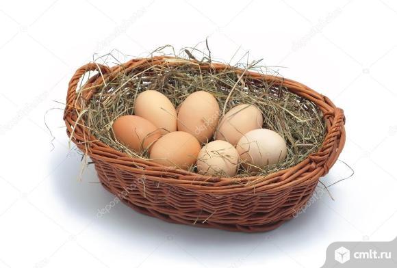Инкубационное яйцо Ливенских кур. Фото 1.