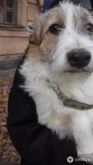 Собака Маша в добрые руки. Фото 1.