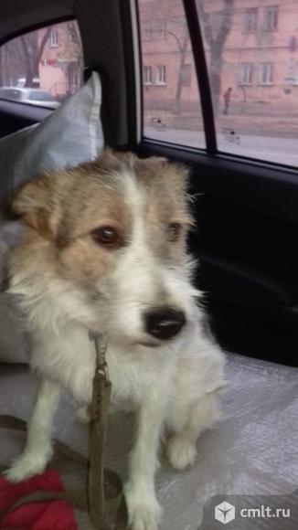 Собака Маша в добрые руки. Фото 3.