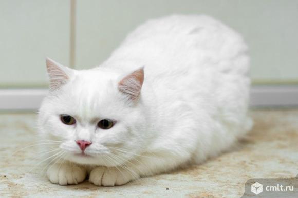 Белоснежный котик Леон. Фото 1.