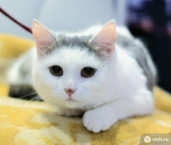 Кошечка Аманда. Фото 1.
