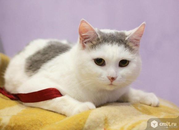 Кошечка Аманда. Фото 2.