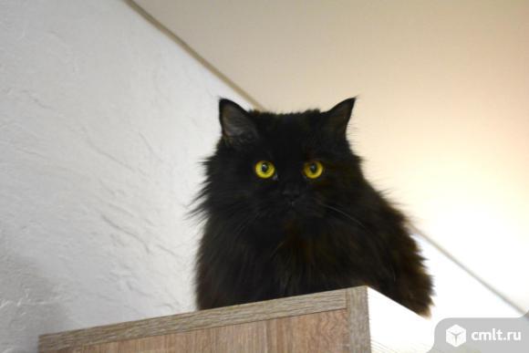 Отдам кошку. Фото 1.