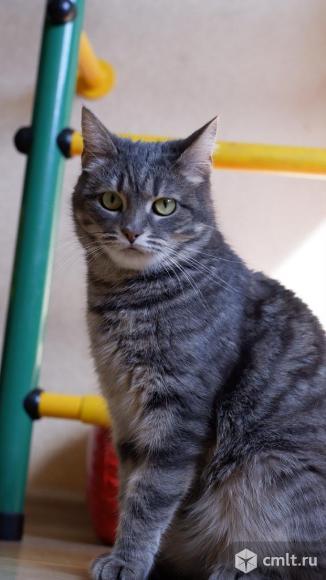 Кошка Дымка в добрые руки. Фото 1.