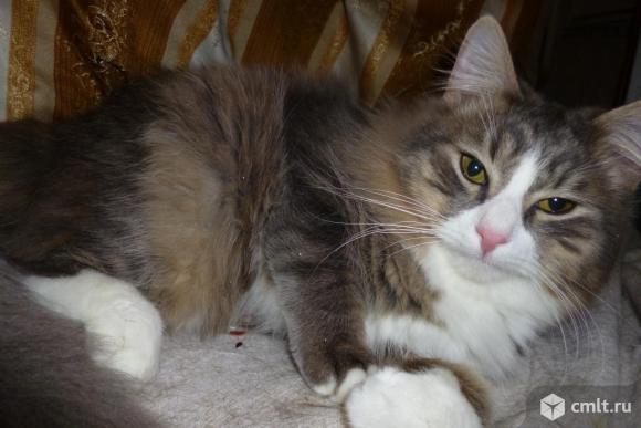 Очаровательный молодой котик Пусик - в надежные руки. Фото 1.