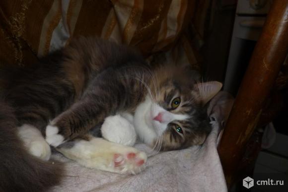 Очаровательный молодой котик Пусик - в надежные руки. Фото 4.