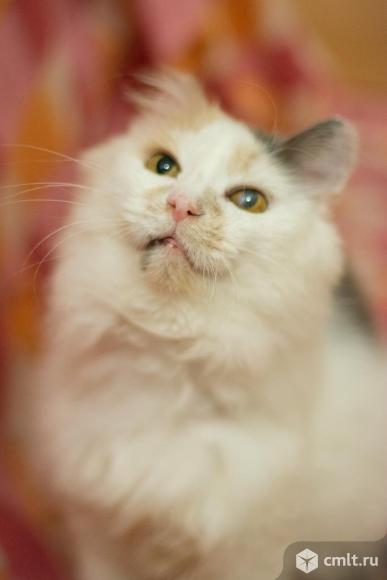 Кошка в добрые руки. Фото 5.