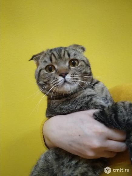котик бася в добрые руки. Фото 1.
