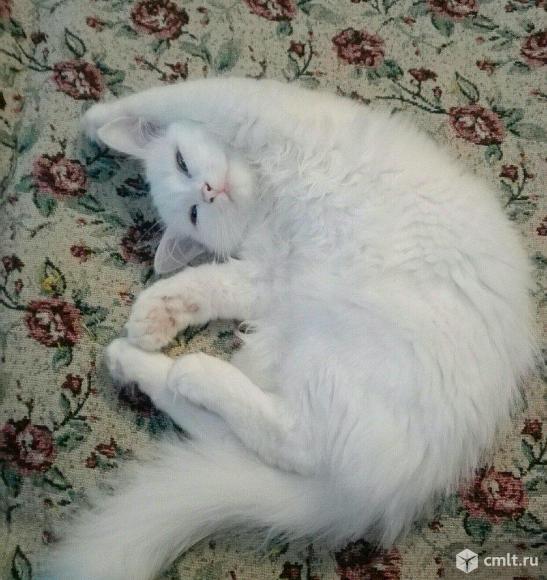 Белая кошка в хорошие руки. Фото 1.