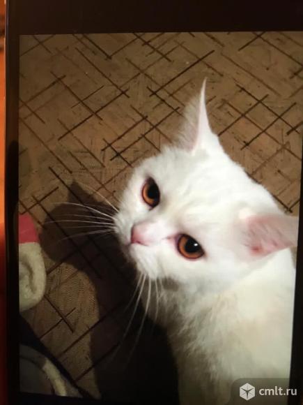 Белая кошка в хорошие руки. Фото 3.