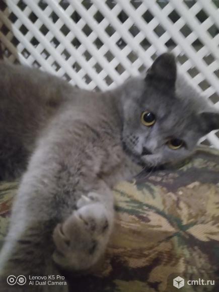 Отдам кошку в добрые руки. Фото 1.