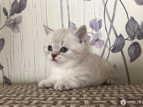 Котик и кошечка. Фото 1.