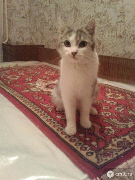 Серо-белый молодой кот. Фото 1.